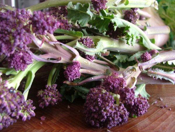 Broccoli Purple Early Sprouting (Organic)