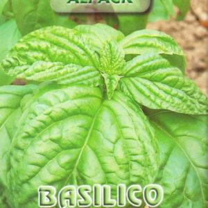 Italian Basil Toscano
