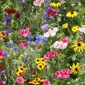 Flower Butterfly & Bee Mix