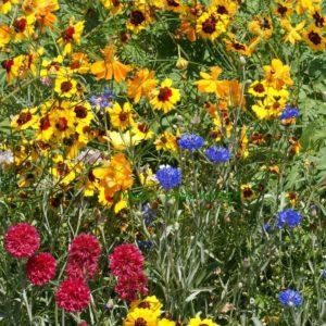 Flower Mix Dry