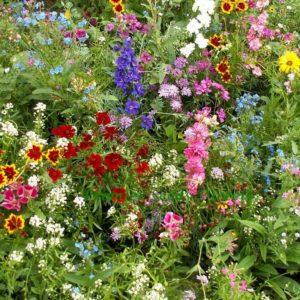 Flower Mix Full Sun