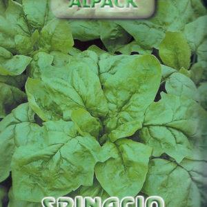 Spinach Gigante Inverno