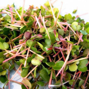 Organic Sprouting Seeds China Rose