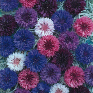 Polka Dot Mix Cornflower