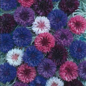 Polka Dot Mix Cornflower