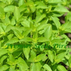 Herb Basil Lemon