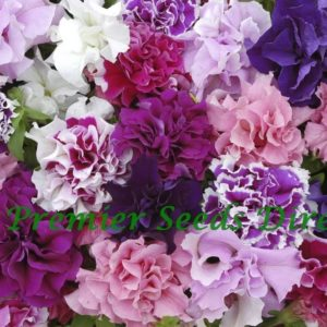 Petunia Grandiflora F1 Double Pirouette Mix