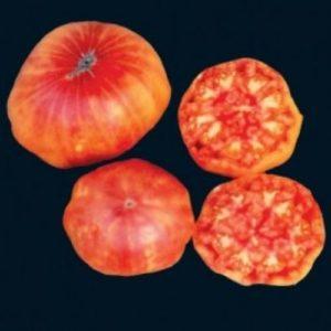 Tomato Flame