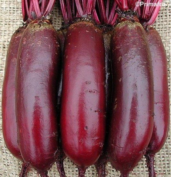 Beetroot Cylindra Organic