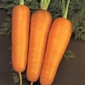 Carrot Chantenay Red Core Organic
