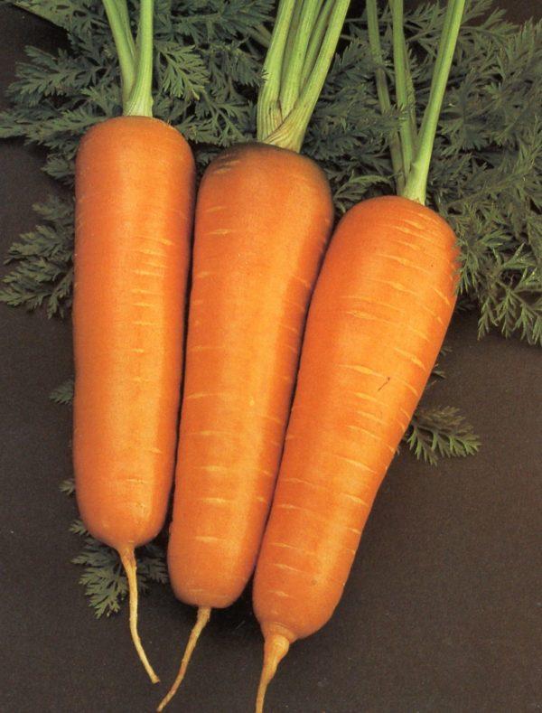 Carrot Chantenay Red Core Organic