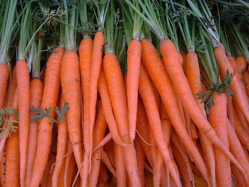 Carrot Tendersweet Organic