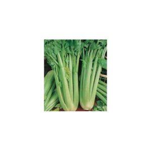 Celery Del Valdarno