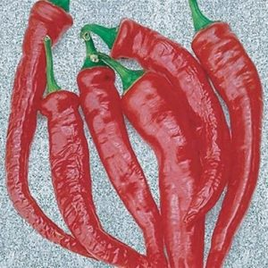 Hot Chilli Pepper Cayenne Thick