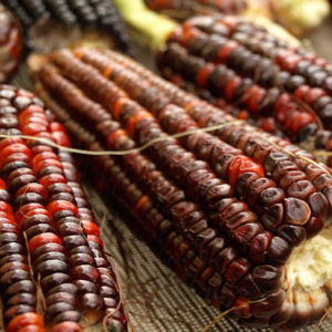 Sweet Corn Bloody Butcher Organic
