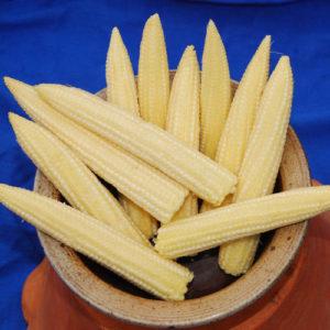 Miniture Sweet Corn Sweetcorn Minipop F1