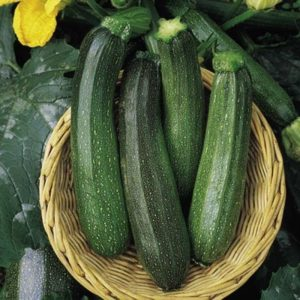 Courgette Green Bush