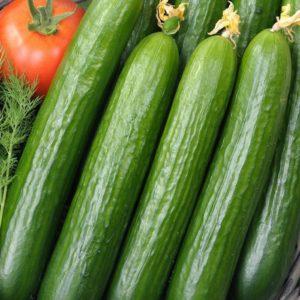Greenhouse Cucumber Femspot F1