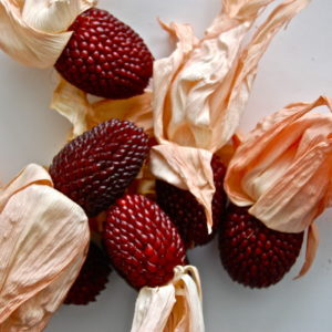 Sweet Corn Strawberry Organic