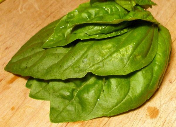 Herb Giant Basil Napoletano Bolloso