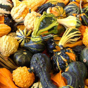 Ornamental Gourd Small Mixed