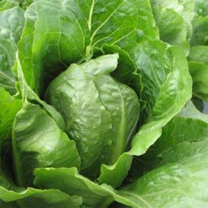 Lettuce Romaine Jericho Organic