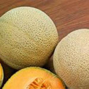 Melon Cantaloupe Hales Best Jumbo