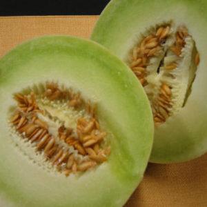 Melon Honeydew