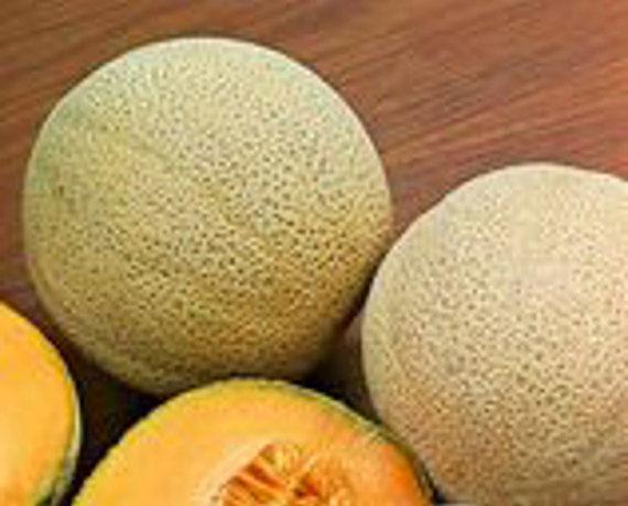 Melon Cantaloupe Hales Best Jumbo Organic