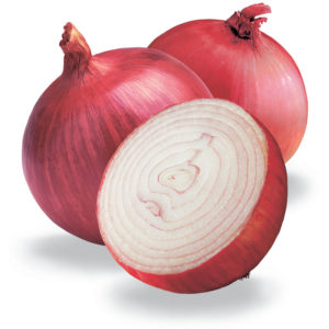 Onion Di Savona