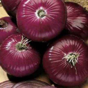 Onion Red Amposta Organic
