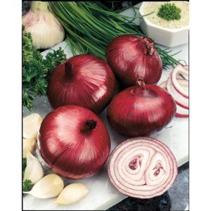 Onion Red Baron Organic