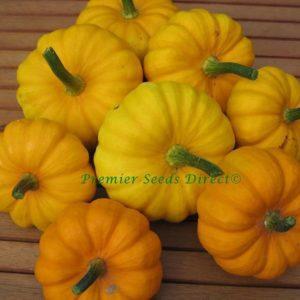 Miniature Pumpkin Jack Be Little Organic