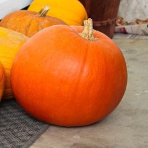 Pumpkin Big Max Organic
