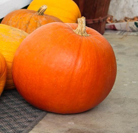 Pumpkin Big Max Organic