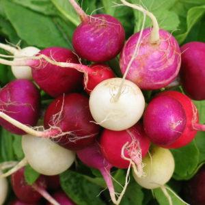 Radish Mixed Coloured Easter Egg Organic