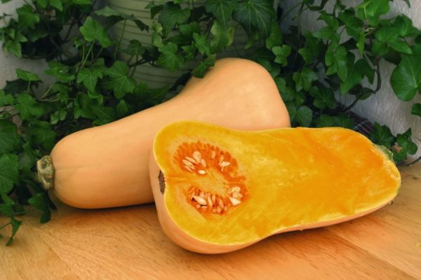 Squash Butternut Hunter F1