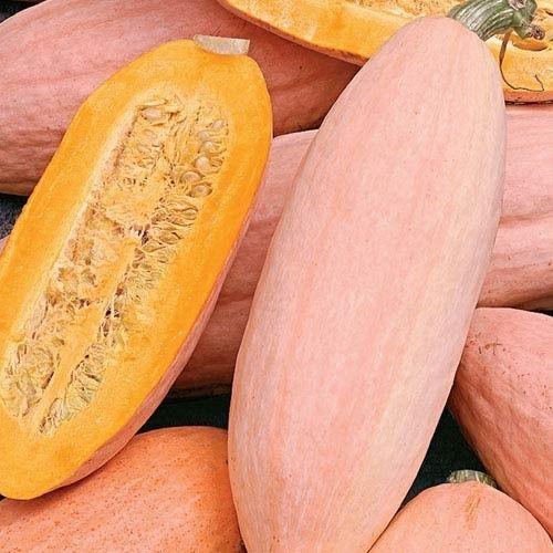 Squash Jumbo Pink Banana Organic