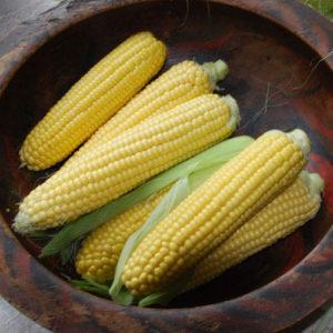 Sweet Corn Sweetcorn Earlibird F1