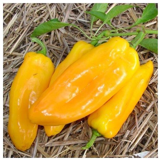 Sweet Pepper Marconi Golden Organic