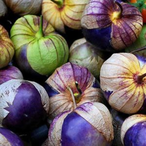 Tomatillo Purple Physalis Ixocarpa