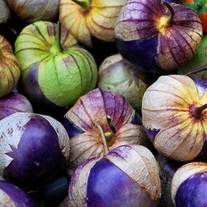 Tomatillo Purple Physalis Ixocarpa Organic