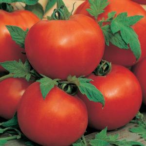 Vegetable Tomato Ailsa Craig