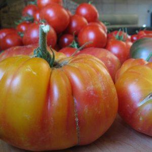Tomato Beefsteak Mr Stripey