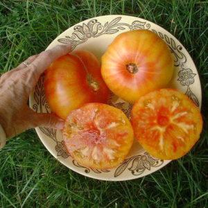 Tomato Beefsteak Pineapple