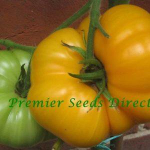 Tomato Brandywine Yellow