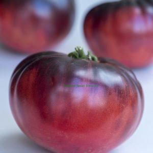 Tomato Indigo Blue Beauty