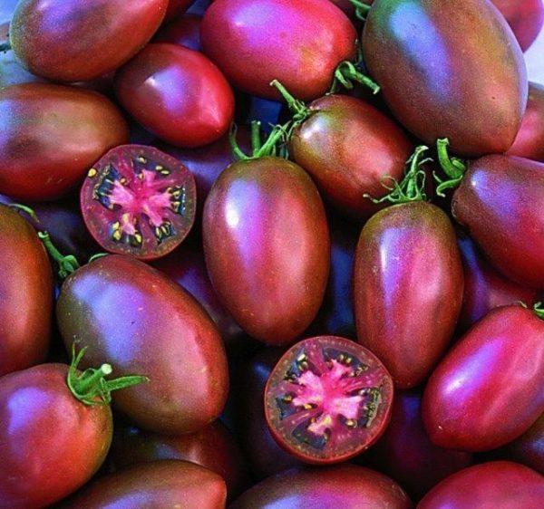 Tomato Ukranian Purple