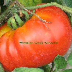 Italian Tomato Costoluto Fiorentino