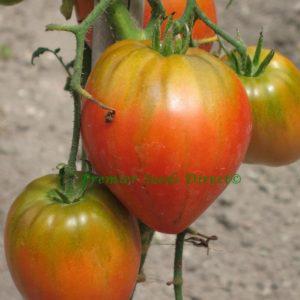 Italian Tomato Cuore Di Bue